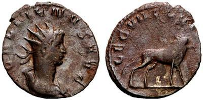 Gallien 787118.m